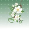 magnolia bloom shorts design